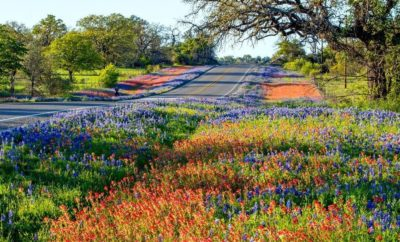 '…Field of New Life' Llano Bluebonnet Video Closes CBS Sunday Morning and Texans Couldn't be More Proud