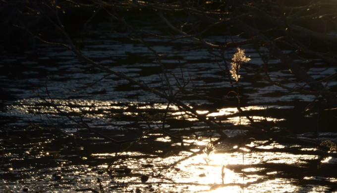 The sun reflected on a stream in the Texas Hill Country