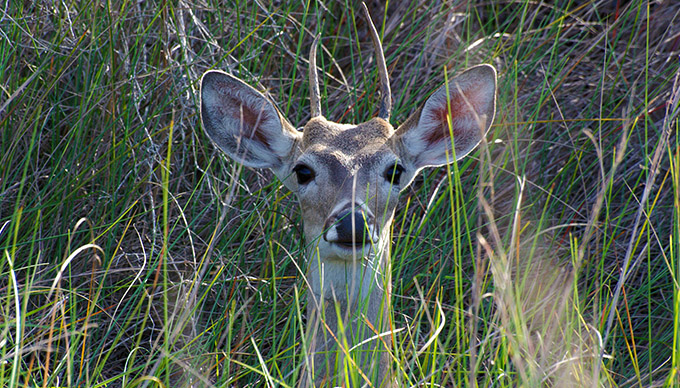 10 Wildlife Species in The Texas Hill Country