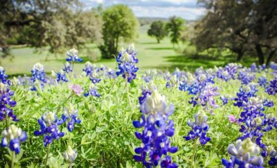 5 Springtime Texas Hill Country Wildflowers To Keep Your Eyes Peeled For