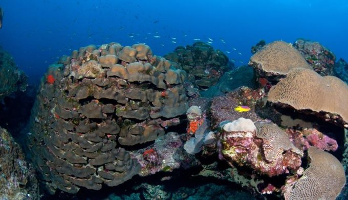 Coral Reef Off Texas Coast Seemingly Unharmed Following Harvey