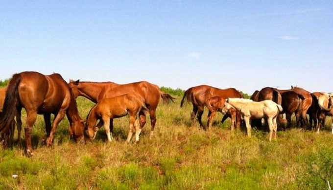 5 of the Biggest Ranches in Texas: Stop Drooling and Read On