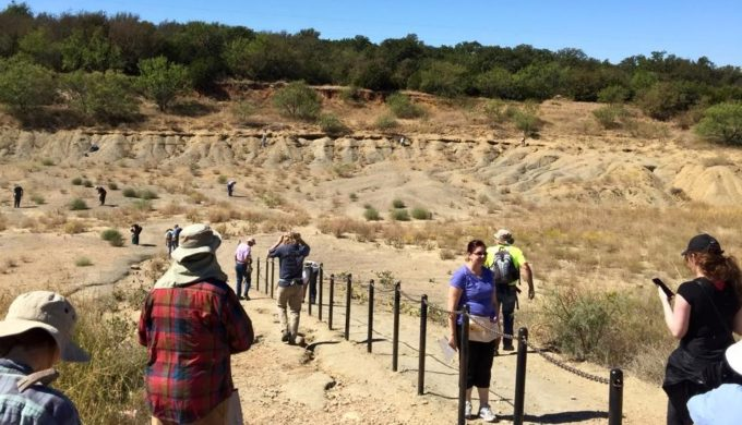 Free Fossil Finding (and Keeping) at Mineral Wells Fossil Park