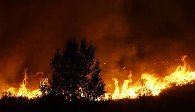 Texas Wildfires Claim the Lives of Three Attempting to Save Cattle in Gray County