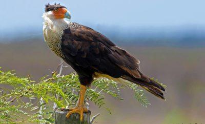 Los Fresnos, Texas: Best Birding, Bobz World, & A Little Graceland Rolled Into One