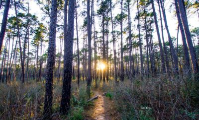 The Lone Star Hiking Trail: Ninety-Six Miles (Plus) of Pure Texas Pleasure
