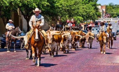 Celebrating 150 Years of the Chisholm Trail: The Driving Of The Herd in Fort Worth