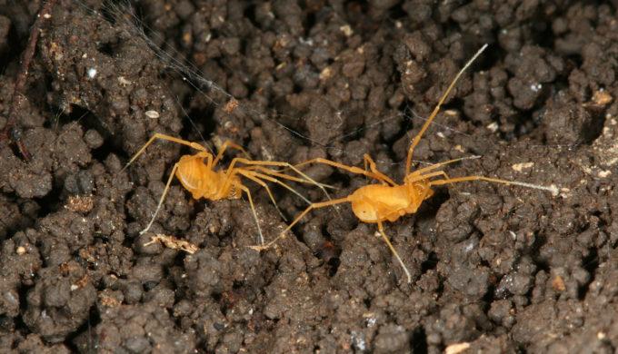 Texas Rancher vs. Spider on Endangered Species List
