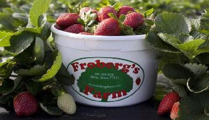 This Pick-Your-Own Strawberry Farm in Texas is a Family Tradition