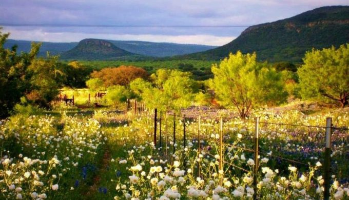 Essential Tips to Make the Most of Your Fredericksburg Wine Tour