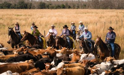 'The Great Florida Cattle Drive: Unbroken Circles' Highlighting a Dying Breed of Man and Beast