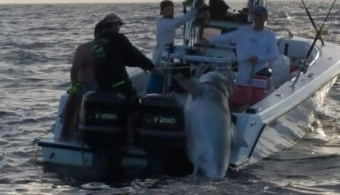 Record-Setting Hammerhead Shark Caught in Texas City Jaycees Fishing Tournament