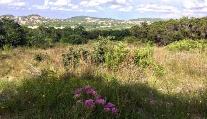 Friedrich Wilderness Park of San Antonio: An Urban Escape With A Mission