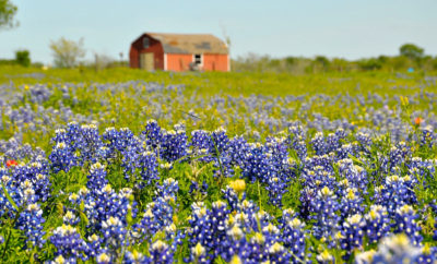 A Tale of 4 Seasons: What's the Best Time to Visit Texas