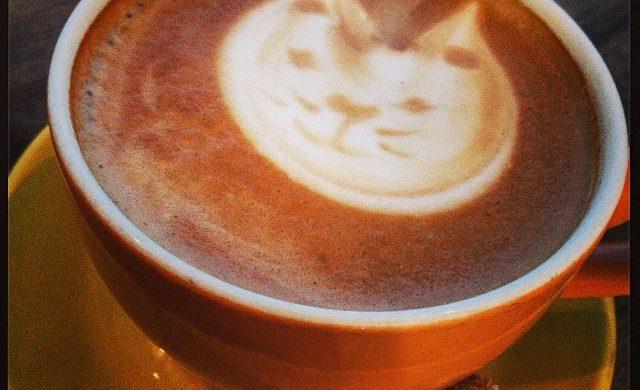 Cat cafes in Dallas