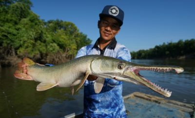Debunking Alligator Gar Myths: TPWD Aims to Educate and Mitigate Fears