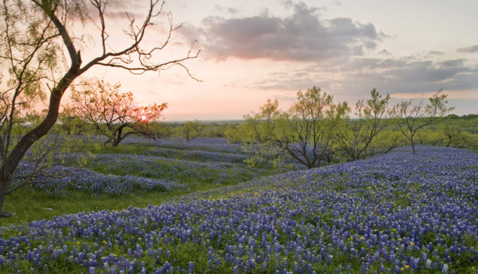 5 Beautifully Breathtaking Drives in Texas to Add to Your Summer Road Trip List