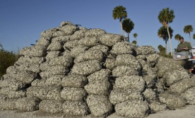 Volunteers Construct South Texas Oyster Reef Using Shells From Area Restaurants