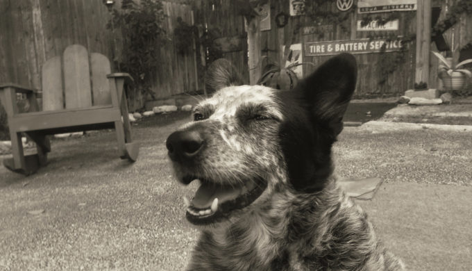 Happy is a Texas Dog.