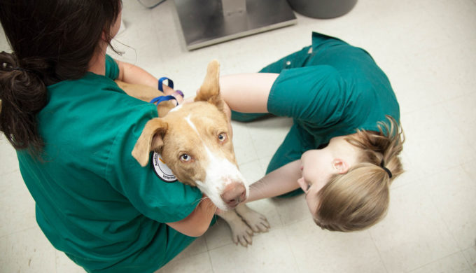Veterinarians Offer Care and Prevention Advice After Contagious Canine Influenza Reaches Texas