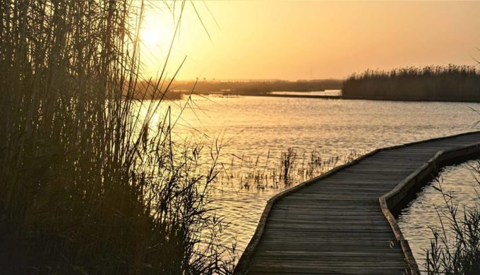 Sea Rim State Park Continues Its Legacy as an Epic Texas Gulf Coast Attraction
