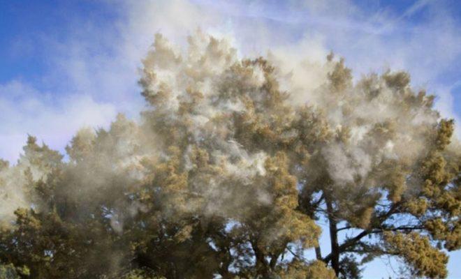 Image result for cedar fever