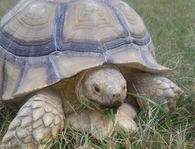 Rescue Turtles and Tortoises in San Marcos Need Homes