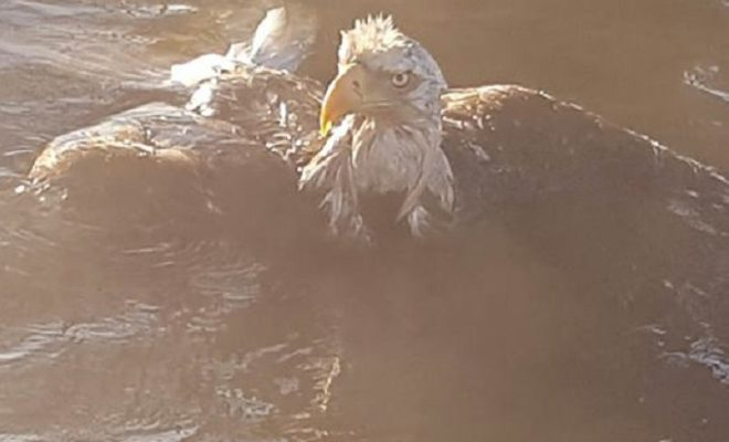 Retired Longview Fire Department Captain Saves Bald Eagle at Lake Sam Rayburn