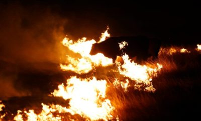 Texas Panhandle Wildfire Relief: Where, How, and What to Donate
