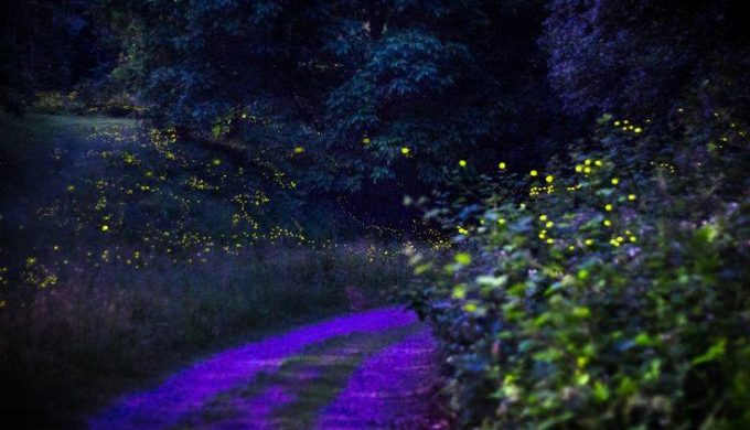 The True Magic of Nature That Fireflies Inspire in the Texas Hill Country