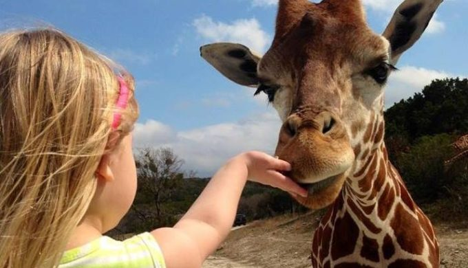 Fossil Rim Wildlife Center: Supporting Endangered Species Preservation and Survival in the Heart of Texas