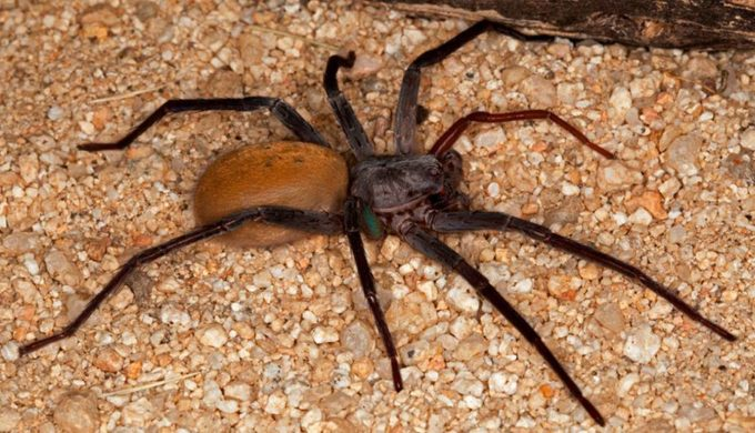 International Research Team Discovers New Species Of Large Cave Dwelling Spider In Mexico