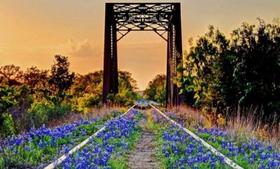 Signs of Springtime in Texas That Will Make Your Day Better