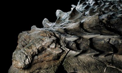 110-Million-Year-Old 'Dinosaur Mummy' Emerges from Oil Sands