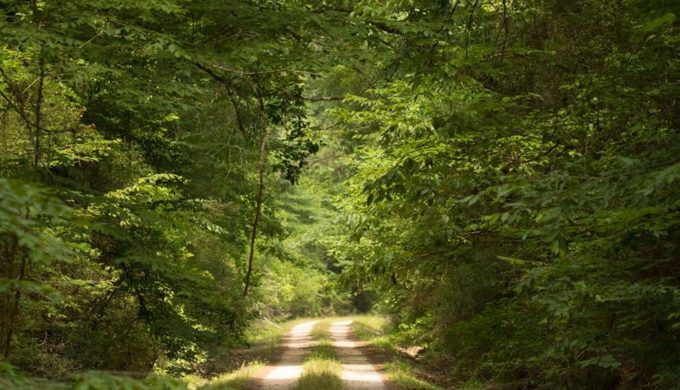 Big Thicket National Preserve: Group Trips Into the Wilds of Southeast Texas