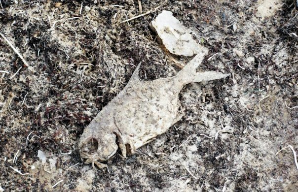 TPWD Investigates 100s of Dead Fish Washing Ashore on Texas Coast