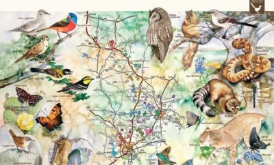 Heart of Texas Wildlife Trails Give Texas Travelers an Insider's Look at the Lone Star State