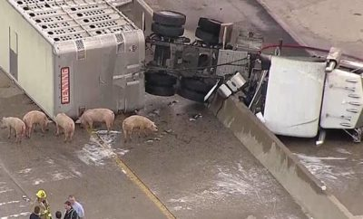 Truck Crashes on I-45 South of Dallas, Causing Quite the Pig Tail