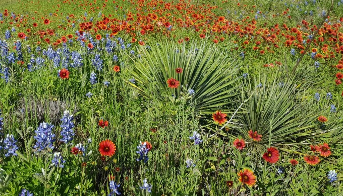 2016 Wildflowers in field with other plants