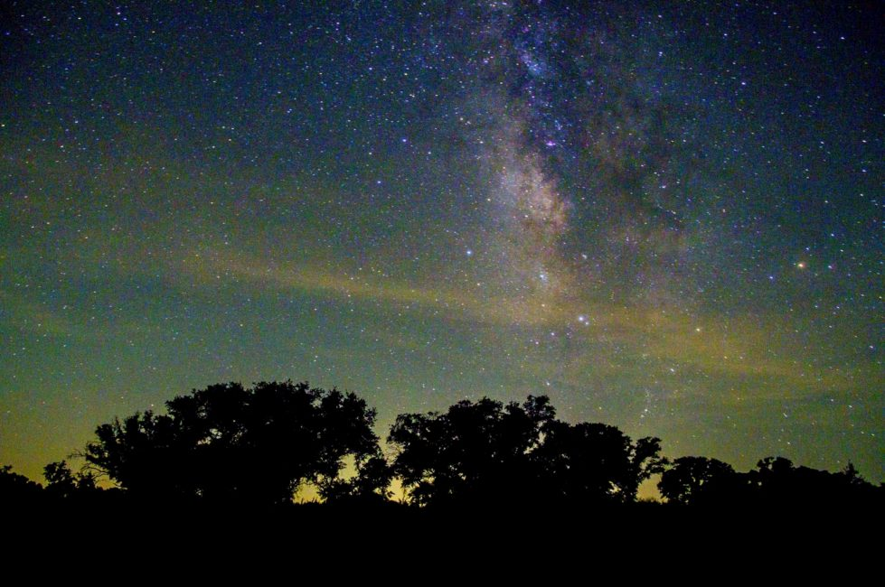 Live Oaks Basking in the Milky Way by Mike Zarella