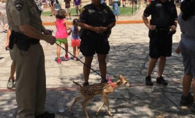 Woman Witnessed With Fawn on a Leash at the Alamo