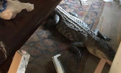 Surprise House Guest Found in Lake Houston Home Following Hurricane Harvey