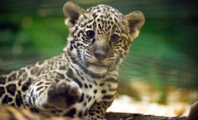 Houston Zoo Announces $150 Million Centennial Fundraising Campaign