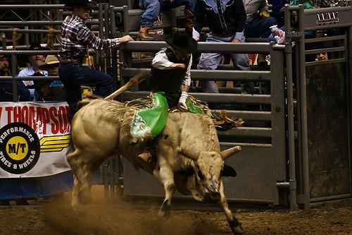 Riding some bulls.