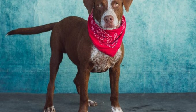 Making a Forever Texas Home for a Shelter Dog at Christmas