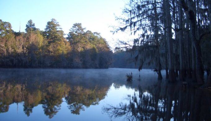 Epic Formula For Pleasure at Texas Treasure, Caddo Lake State Park