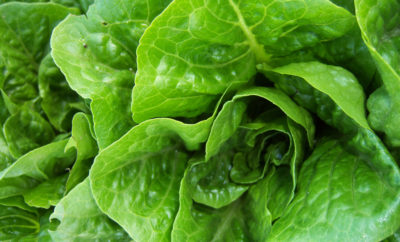 CDC Issues Warning: Romaine Lettuce is Unsafe to Consume