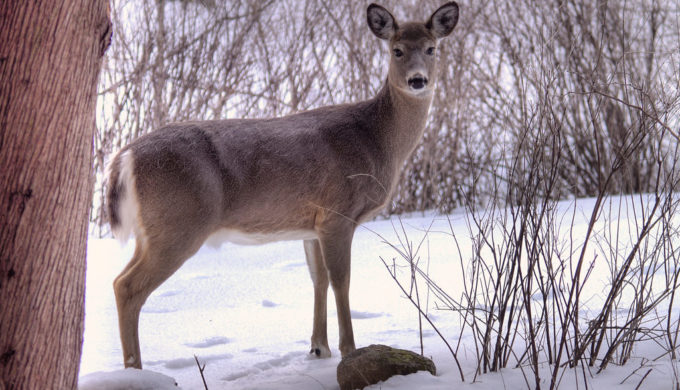 Family's Pet Deer Shot & Killed In Front of Them