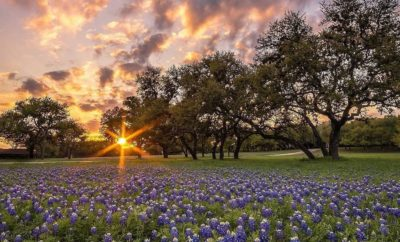 Top Texas Bluebonnet Posts On Our Instagram Feed: What's on Yours?