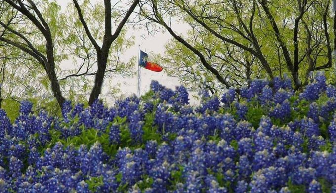 Long Term Forecast for Texas: 100 Percent Chance of Bluebonnets
